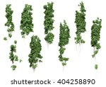 ivy leaves isolated on a white... | Shutterstock . vector #404258890