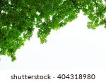 green leaves and branches on...   Shutterstock . vector #404318980