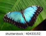 Vibrant Blue Butterfly  Morpho...