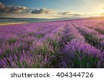 meadow of lavender. nature... | Shutterstock . vector #404344726