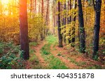 photografer walking in the pine ...   Shutterstock . vector #404351878