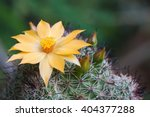 Cactus Flowers Yellow Beautifu...