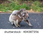 australia baby koala bear and... | Shutterstock . vector #404387356