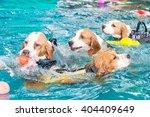 Group Of Cute Beagle Dog...