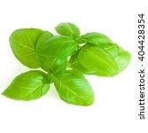 basil isolated on white... | Shutterstock . vector #404428354