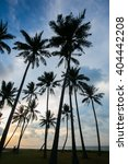 Palm Trees Against Blue Sky In...
