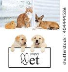 Stock photo red cat and a dog and guinea pig together on window 404444536