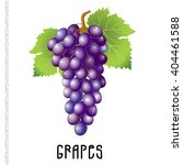 bunch of grapes on a white... | Shutterstock .eps vector #404461588