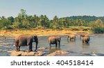 family asia elephant bath in... | Shutterstock . vector #404518414