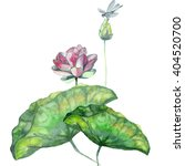 Watercolor Pink Lotus With Bud...