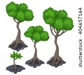 The Stages Of Growing Tree Wit...