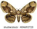 huge philippine brahmin moth ...   Shutterstock . vector #404692723
