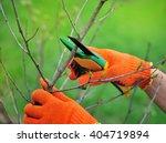Hands With Gloves Of Gardener...