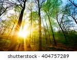 sunset in the forest | Shutterstock . vector #404757289
