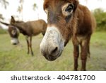 Donkey Is A Funny Cute And...