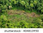 Forest Destruction With Rainbo...