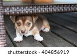 Stock photo small puppy hiding under outdoor furniture 404856919