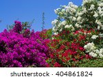 Flowered Bushes And Blue Sky