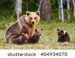 Brown mother bear protecting...