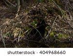 beaver cave | Shutterstock . vector #404968660