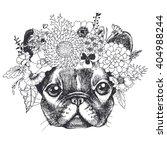 Portrait Of A French Bulldog...