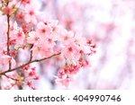 pink sakura  | Shutterstock . vector #404990746