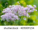 Garden Flowers Blooming In The...