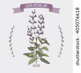 color salvia officinalis aka...   Shutterstock .eps vector #405076618