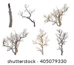 Set Of Dead Tree Isolated On...