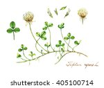 Hand Drawn Watercolor Botanica...