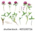 Watercolor Botanical Drawing O...