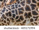 Detail View Of Giraffe Skin...
