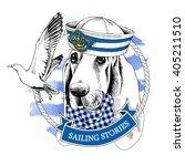 Dog Basset Hound Portrait In A...