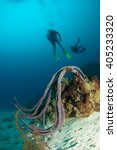 reefscapes  grand cayman   Shutterstock . vector #405233320