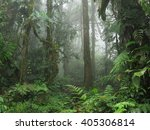 american tropical jungle... | Shutterstock . vector #405306814