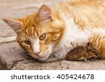 Rusty House Cat With Mouse  Ca...