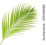 Small photo of Green palm leaf isolated on white background