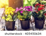 Decorated Outdoor Gardening...