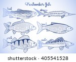 graphic fish collection drawn... | Shutterstock .eps vector #405541528