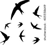 swallow  bird silhouette  ... | Shutterstock .eps vector #405558649