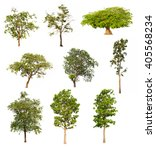 tree collection set isolated on ... | Shutterstock . vector #405568234