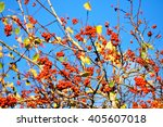 Autumn Colorful Background  ...