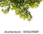 tree branch isolated | Shutterstock . vector #405639889