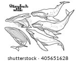 collection of graphic humpback... | Shutterstock .eps vector #405651628