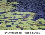 Abstract Of Many Lily Pads...
