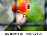 Red Crowned Amazon Parrot In...