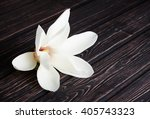 Small photo of white magnolia flower close-up. White magnolia on a dark background