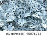 natural background   Shutterstock . vector #40576783