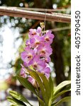 Small photo of pink orchid Vanda in the garden.