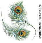 peacock feathers | Shutterstock .eps vector #405846778